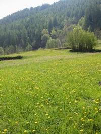 Natura Valtellina