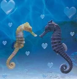 San Valentino al Gardaland Sea Life