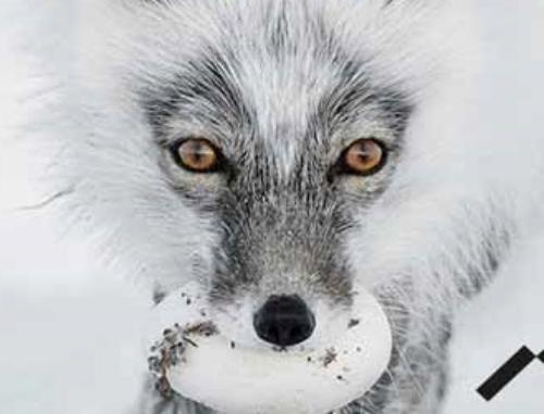 Wildlife Photographer of the Year - 53esima edizione