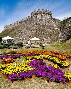 Fiori nella rocca mostra mercato di piante rare a lonato for Veneta arredi alessandria orari