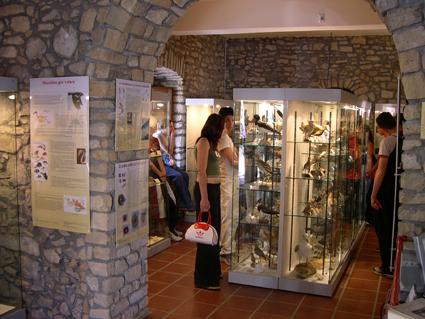 Museo Ornitologico (Siddi - CA)