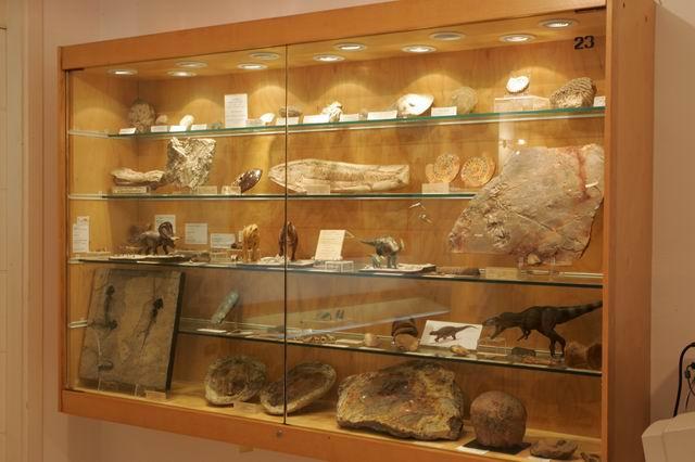 Sezione Paleontologica - Museo Mineralogico Campano - Fondazone Discepolo