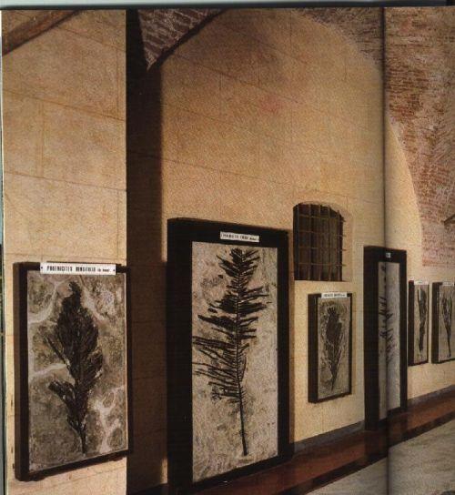 Villa Malinverni: Fossili