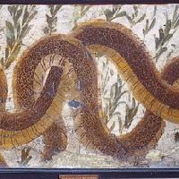 Serpenti agatodemoni da Ercolano, 13 settembre 1745