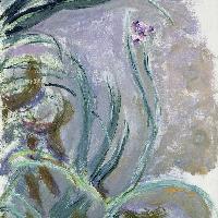 Iris, 1924-1925