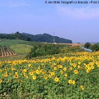 Basso Monferrato: Archivio fotografico Alexala - Foto Massimiliano Navarria