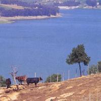 Lago Ancipa - A.A.P.I.T. ENNA