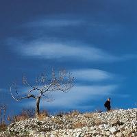 Mattinata - Foto Comunità Montana del Gargano