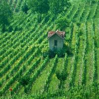 Asti, le vigne - foto Vittorio Ubertone